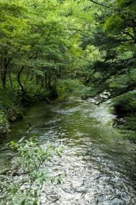 河童橋~明神池10